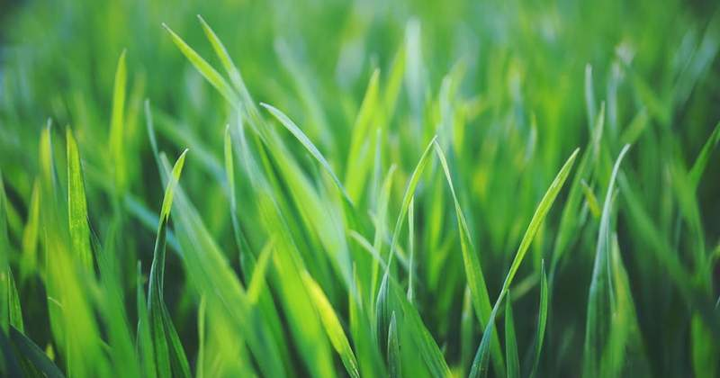 Curb Appeal: 4 Fixes for a Lush Lawn