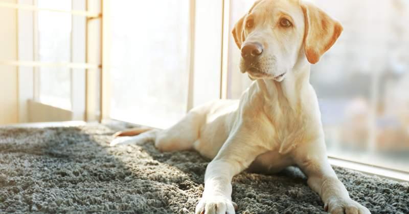 4 Pet-Friendly Home Improvements