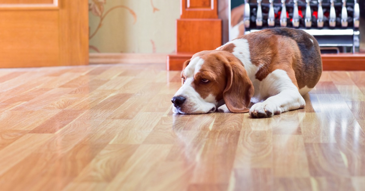 7 tips for cleaning hardwood flooring.